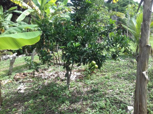 Fazenda Marau/Ubaitaba - Foto 13