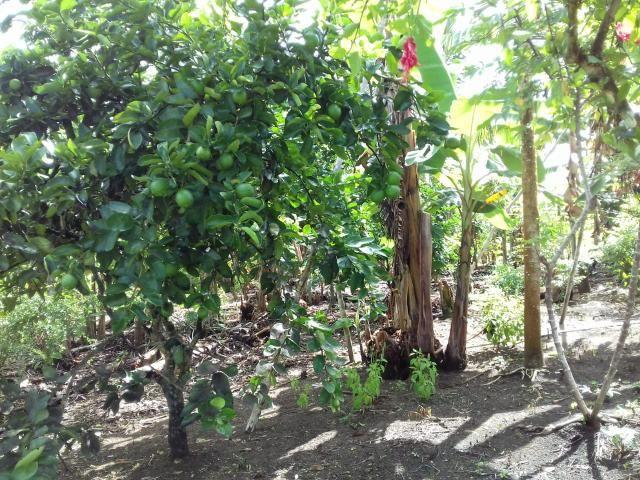 Fazenda Marau/Ubaitaba - Foto 20