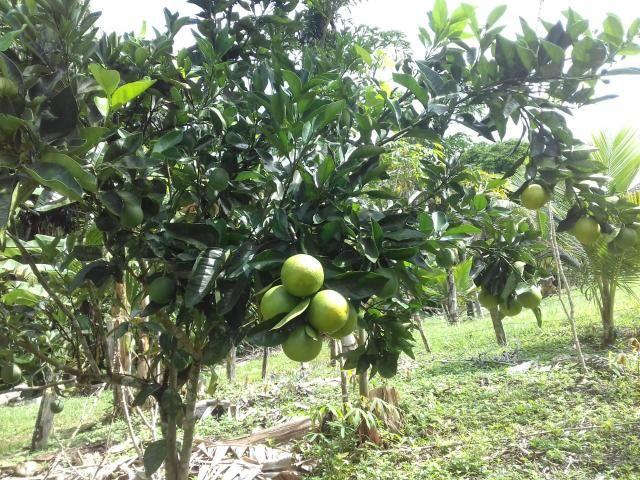 Fazenda Marau/Ubaitaba - Foto 11