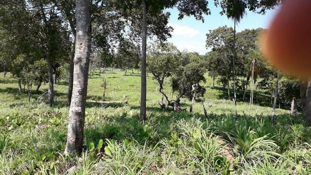 Chácara no município de Cariri do Tocantins - Foto 11