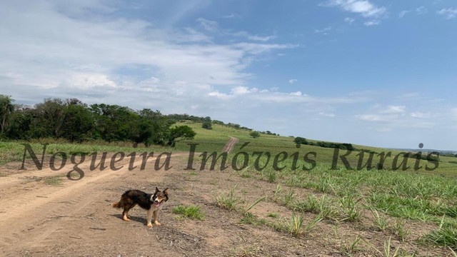 Fazenda com 72 alqueires na região de Itapetininga (Nogueira Imóveis Rurais) - Foto 4