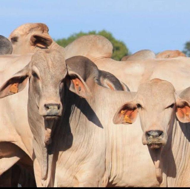 Custeio rural sem fiadores - Foto 2