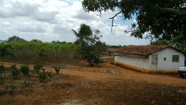 Ótima propriedade de 7.5 hectares, próximo a Lagoa de Itaenga-PE - Foto 2