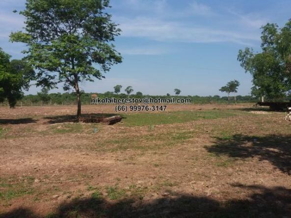 Fazenda 650 hectares nordeste mt nikolaiimoveis