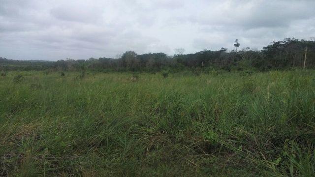 Vendo fazenda 97 hectares