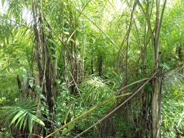 Fazenda Marau/Ubaitaba - Foto 19