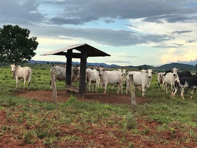Fazenda em Itamaraju. 5 mil hectares - Foto 5