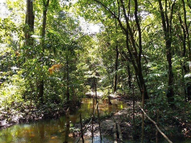 50 hectares a 50 km de Castanhal por 350 mil reais zap * - Foto 2
