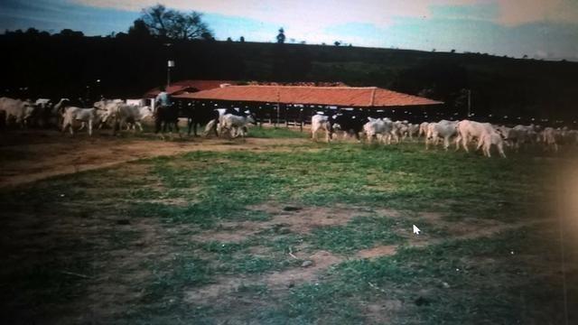 Vendo fazenda de Pecuária com 1.720 hectáres - Foto 20