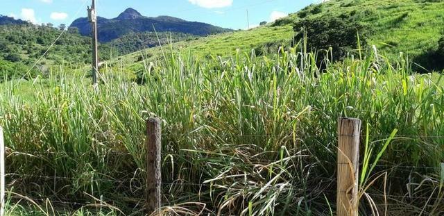 1010/Extraordinária fazenda de 5.199 ha para pecuária - Foto 10