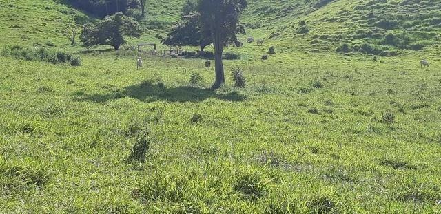 1010/Extraordinária fazenda de 5.199 ha para pecuária - Foto 6