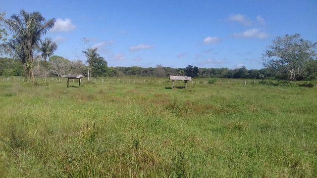 Sítio no Pará,20 hectares com pasto, curral, casa ,igarape por 250 mil reais - Foto 2