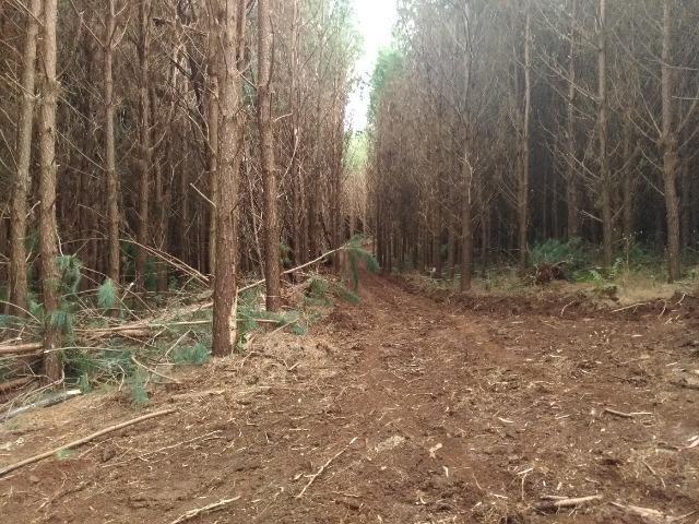 Fazenda com reflorestamento de Pinus e Eucalipto 80ha Goioxim - Foto 3
