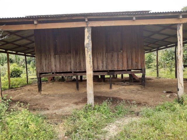 Área de 250 hectares sendo 130 formado  - Foto 3