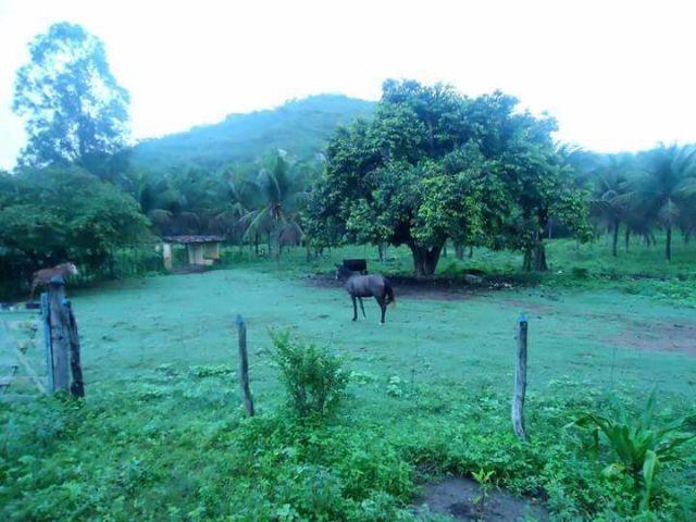 Fazenda em Riachão do Bacamarte, (50 Hectares) 29km de Campina G