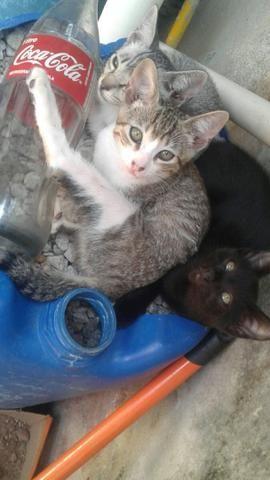 Dois lindos gatos pra doação