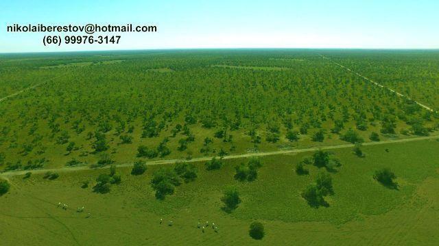 Fazenda 48.000 hectares leste mt nikolaiimoveis