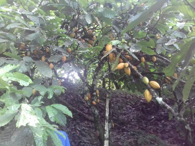 Fazenda Marau/Ubaitaba - Foto 2