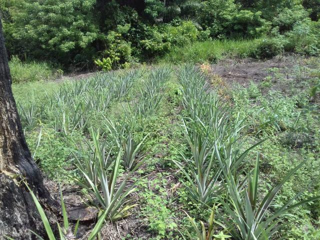 Fazenda Marau/Ubaitaba - Foto 5