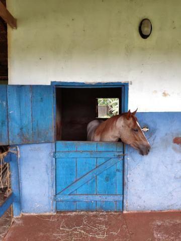 Chácara à venda, 5000 m² por R$ 600.000 - Três Lagoas - Foz do Iguaçu/PR - Foto 4