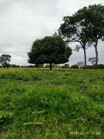 Chácara no município de Cariri do Tocantins - Foto 3