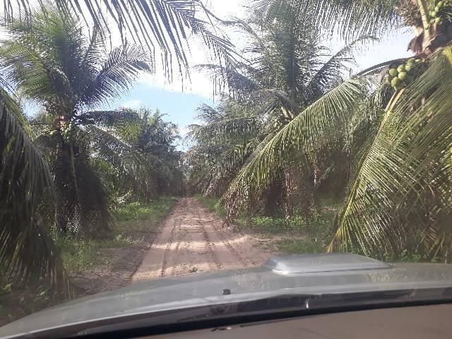 FAZENDA DE COQUEIROS COM EXCELENTE PRODUÇÃO MENSAL ARENA - Foto 14