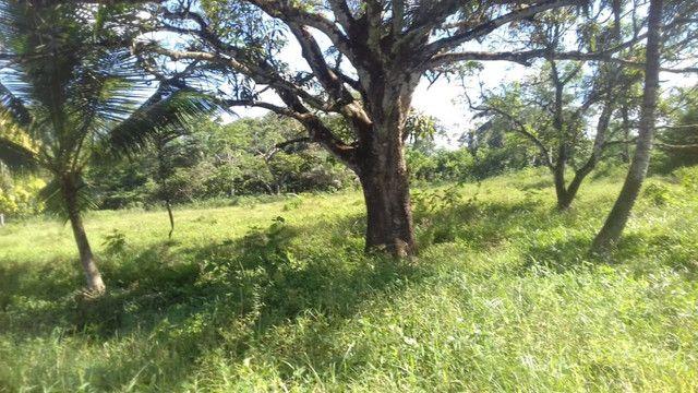 Sítio no Pará,20 hectares com pasto, curral, casa ,igarape por 250 mil reais - Foto 17