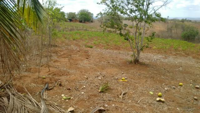 Ótima propriedade de 7.5 hectares, próximo a Lagoa de Itaenga-PE - Foto 8