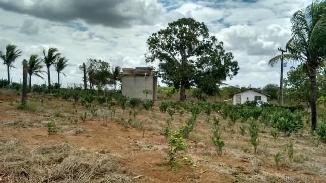 Ótima propriedade de 7.5 hectares, próximo a Lagoa de Itaenga-PE - Foto 3