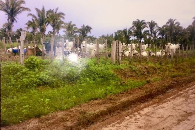 Vende-se Fazenda (abaixo o preço p vender logo) - Foto 3