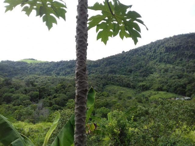 Fazenda Marau/Ubaitaba - Foto 16