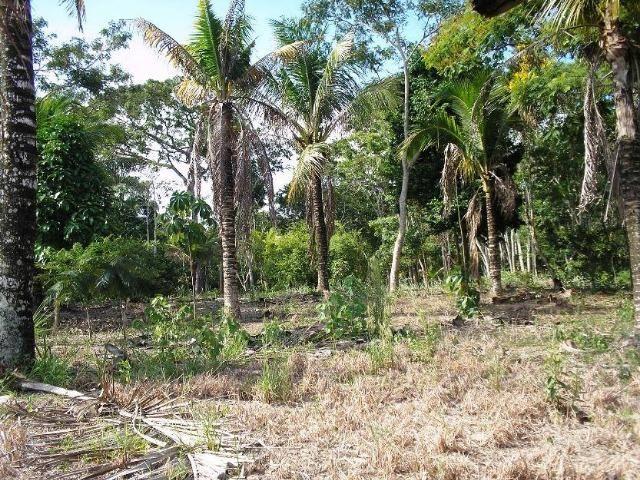 COD-116: Sítio em Bicuiba - Saquarema - Foto 11