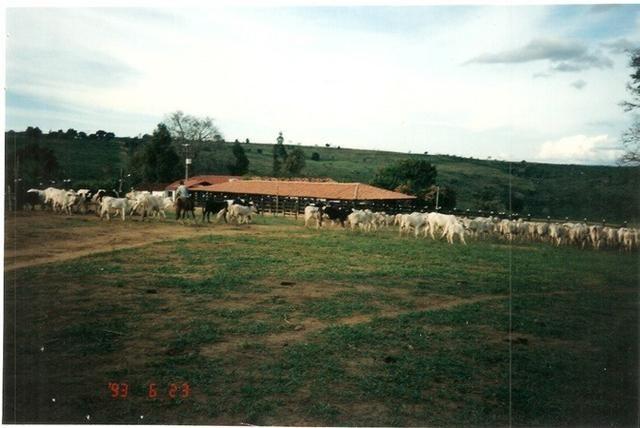 Vendo fazenda de Pecuária com 1.720 hectáres - Foto 7