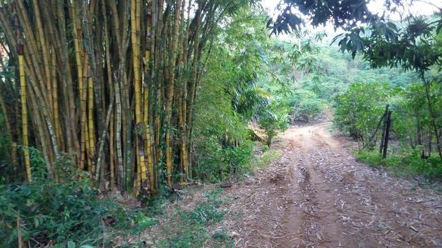 Vende-se Bambu - Foto 3
