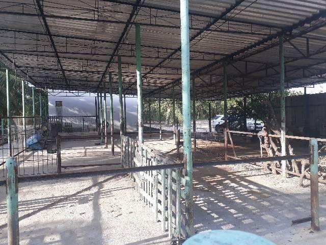 FAZENDA DE COQUEIROS COM EXCELENTE PRODUÇÃO MENSAL ARENA - Foto 18