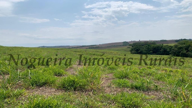 Fazenda com 72 alqueires na região de Itapetininga (Nogueira Imóveis Rurais) - Foto 19