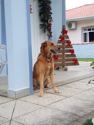 Cachorro ensinado - DOAÇÃO