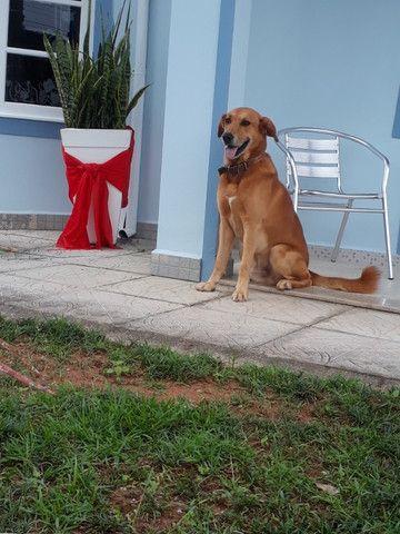 Cachorro ensinado - DOAÇÃO - Foto 3