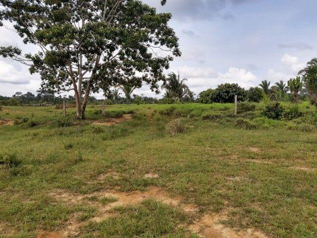 Área de 250 hectares sendo 130 formado  - Foto 2