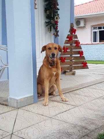Cachorro ensinado - DOAÇÃO - Foto 2
