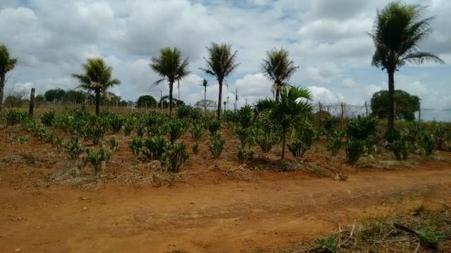 Ótima propriedade de 7.5 hectares, próximo a Lagoa de Itaenga-PE - Foto 9