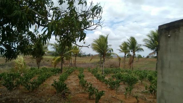 Ótima propriedade de 7.5 hectares, próximo a Lagoa de Itaenga-PE - Foto 11