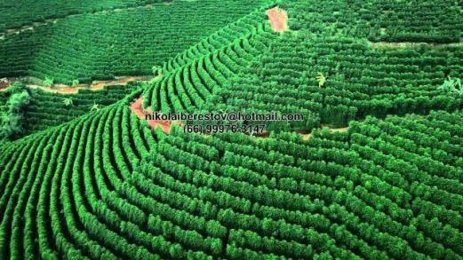 Fazenda 1.300 hectares nordeste mt nikolaiimoveis