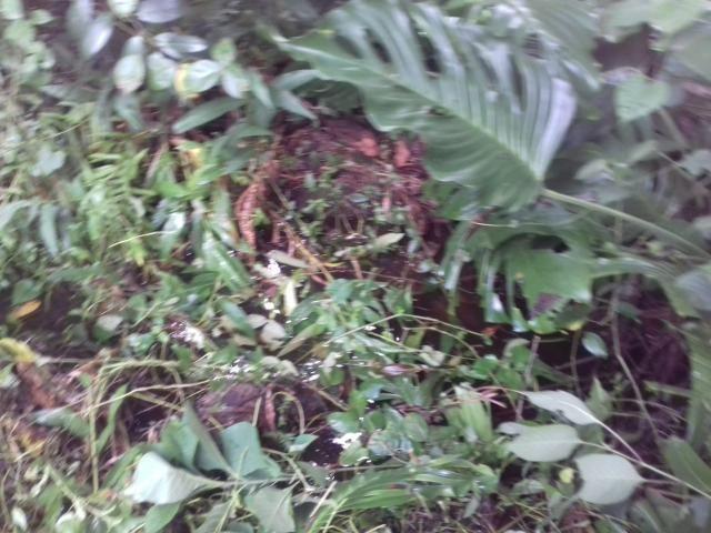 Fazenda Marau/Ubaitaba - Foto 3
