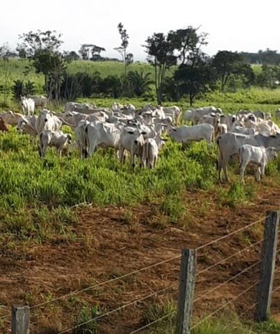 Fazenda em Itamaraju. 5 mil hectares - Foto 2