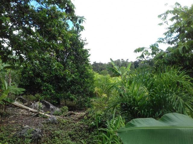 Fazenda Marau/Ubaitaba - Foto 14