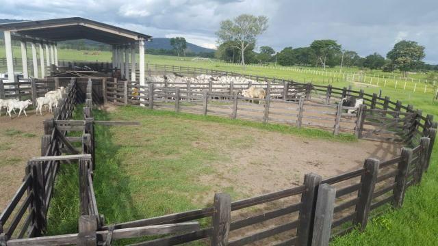 Fazenda Santo Antonio Leverger 870 Hectares - Foto 13