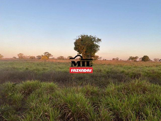 Fazenda 236 alqueires ( 1142 hectares ) Jaú-TO - Foto 6