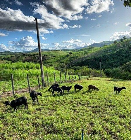Sitio/Fazenda em Passira, Pernambuco. 12,7 hectares. - Foto 7