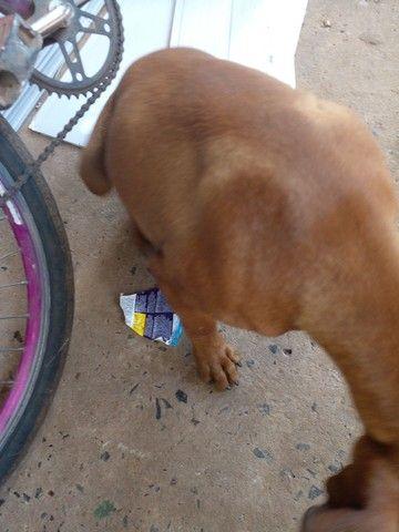 Ajudem o cachorro da minha filha  - Foto 3